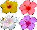 Strijkapplicatie Hibiscus